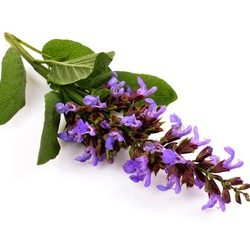 Clary Sage Fragrance
